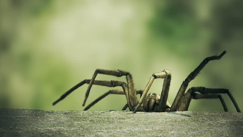 Big venomous spider climbing up to the edge of the concrete curb. #4326953