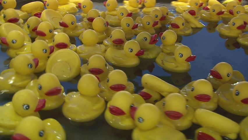 Plastic Ducks Floating Around in Stock Footage Video (100% Royalty ...