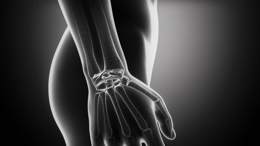 Carpal Bones Stock Video Footage 4k And Hd Video Clips Shutterstock