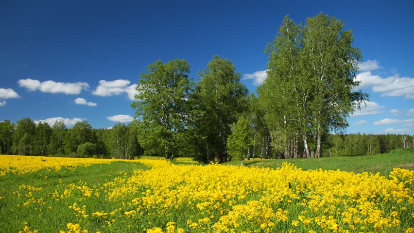 Summer Landscape With Yellow Flowers Stock Footage Video 100