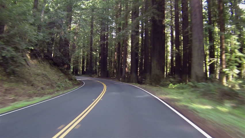Vacation drive through redwood forest California. Vacation travel in vehicles along scenic byway and roads. Redwood National and State parks with old growth trees and new growth.