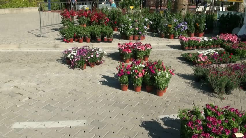 Flower Fair Various Flowers In Agriculture Hd Stock Footage Clip