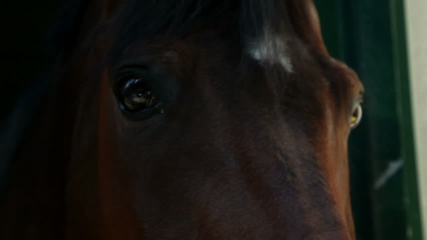 extreme close up on brown horse eyes