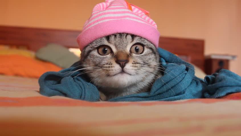 Suzie the bomb cat looking good under a cap