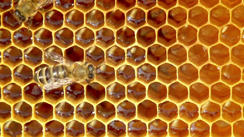Close-up view of bees on honeycomb slow motion