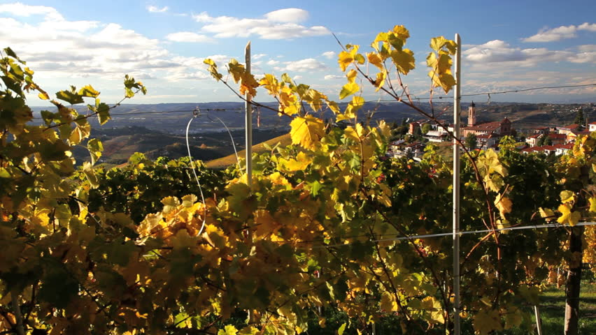 Jib view of beautiful vineyards and a small rural town of Treiso near Alba, Italy