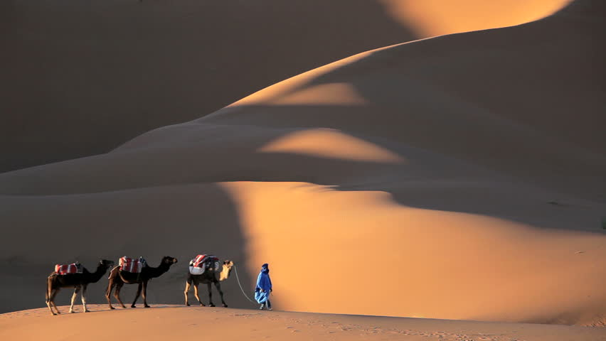 Indigenous man in Touareg robes leading a caravan of camels in the Sahara Desert, Morocco, Africa