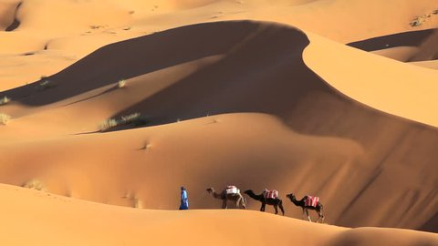 Nomadic man in indigenous Touareg robes with a commercial camel caravan in the Sahara Desert near Ê Erg Chebbi, Morocco, Africa