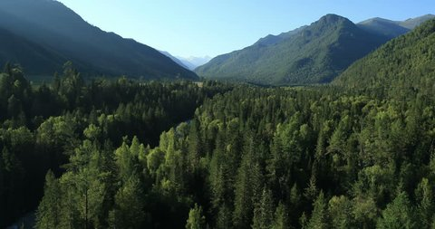 Aerial View. Flying over the beautiful mountain River and beautiful forest. Aerial camera shot. Landscape panorama. Altai, Siberia.