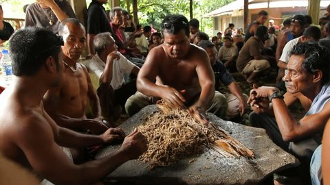 MICRONESIA - MAY 2012: Men make the traditional drink Sakau on Pohnpei Island during a funeral