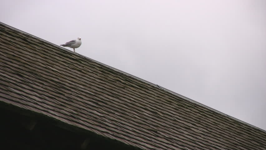 Initially focused on two seagulls perched on a roof, then zoomed out to reveal a wooden covered bridge.  Guelph, Ontario, Canada