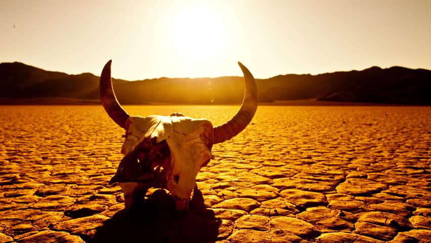 Pan of Skull on the Desert Floor - Death Valley  - 4K -  4096x2304