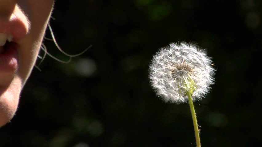Blow Dandelion Slow Motion