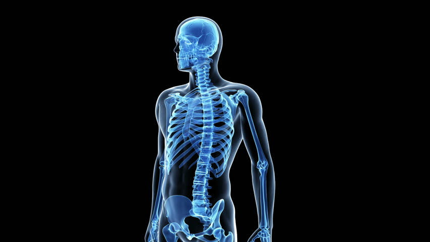 Human Anatomy Stock Video Footage 4k And Hd Video Clips Shutterstock