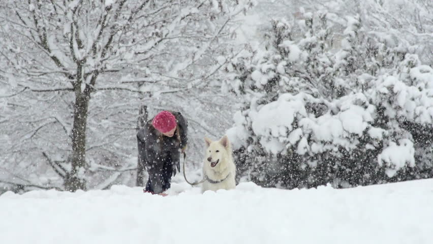 Slow Motion Of White Swiss Shepherd Dog And Its Owner Throwing Snowball On A