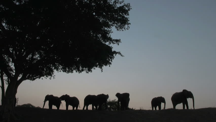 Elephant Group Sunset