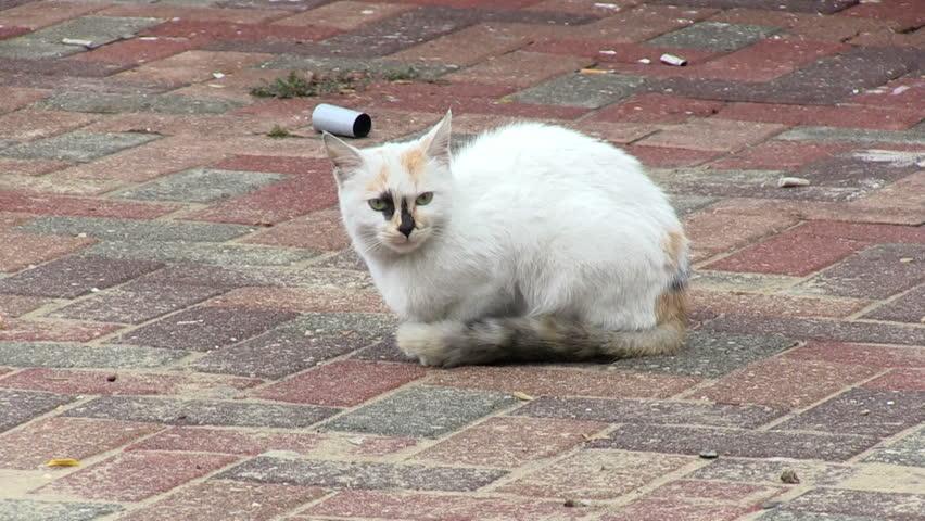 Stray wet cat on the street.