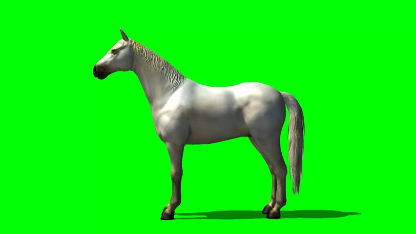 white horse in trot animal green screen video footage