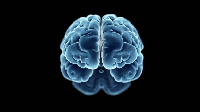 Human Brain Anatomy Stock Video Footage 4k And Hd Video Clips