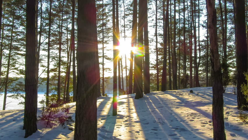 Winter forest and sun, 4K timelapse | Shutterstock HD Video #5388413