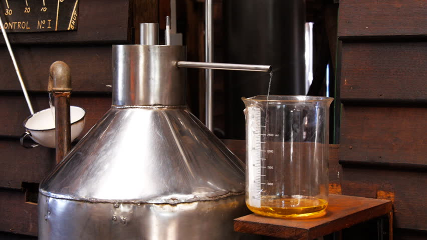 lavender essential oil flows into a flask from a steam distillation separator