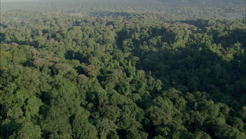 Aerial shot of a tropical rainforest.