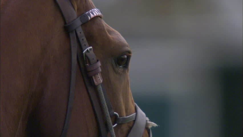 Polo Horse Blinking in slow motion during a Polo match | Shutterstock HD Video #5507759