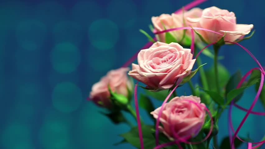 Pink rose in the wind on right with turquoise blurry background | Shutterstock HD Video #5583533
