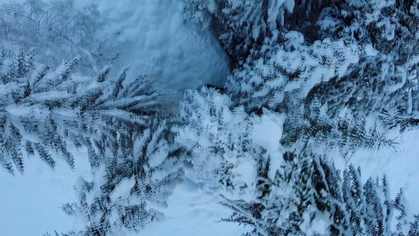 flying over snow trees. winter landscape. beautiful nature. woods forest. aerial view