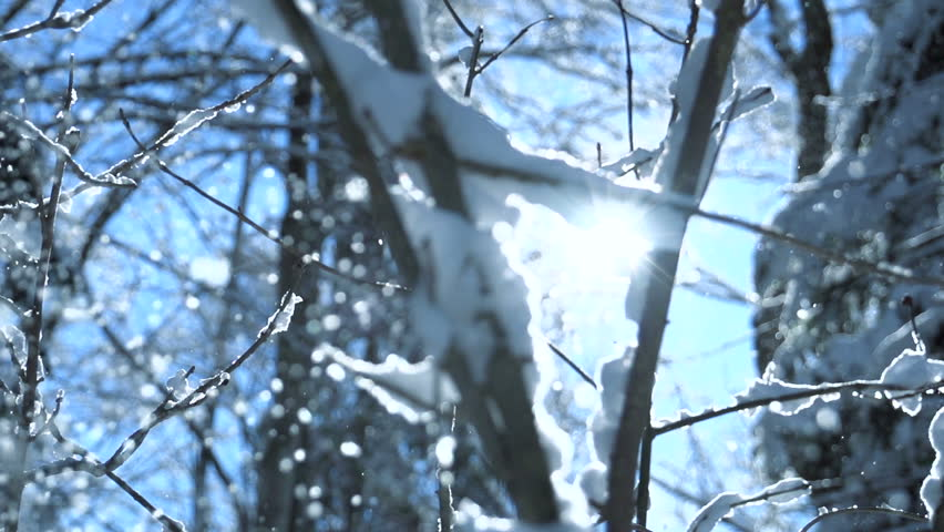 Snow trees. snowing snowy. sunset dusk sunshine. woods nature. slow motion. winter background. romantic wonderland. beautiful environment  | Shutterstock HD Video #5594714
