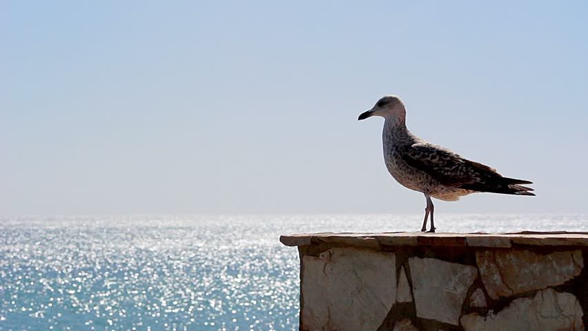 Young seagull standing on a wall #5632037