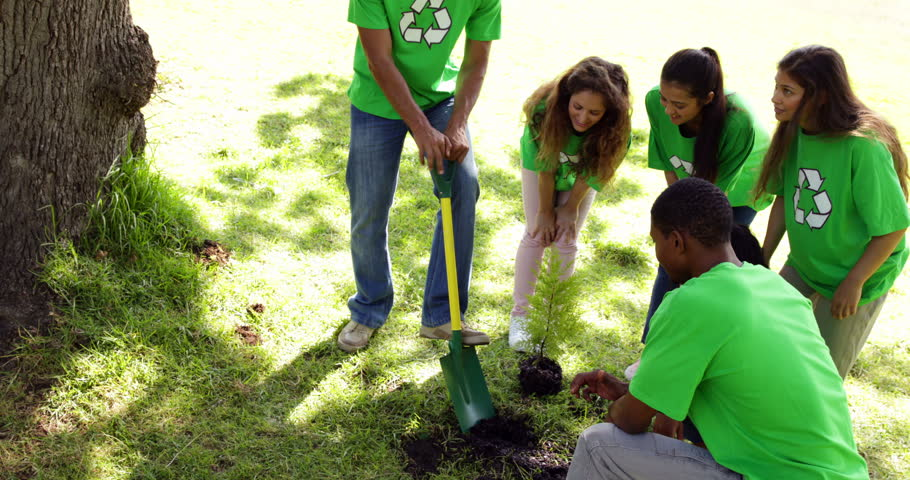 Environmental activists planting a tree in the park on a sunny day