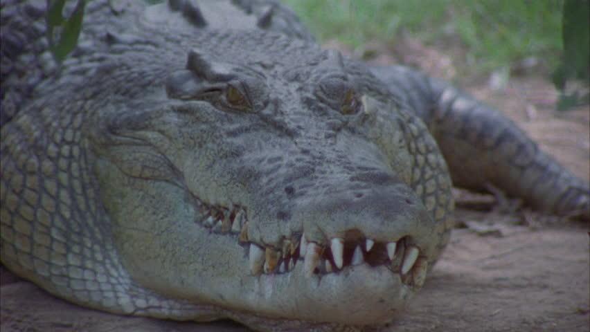 Header of croc