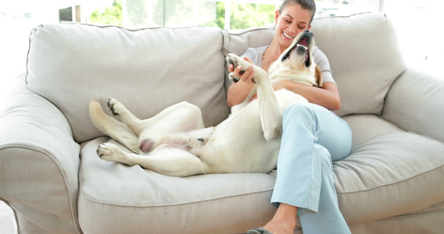 Laughing woman petting her labrador dog on the couch at home in the living room