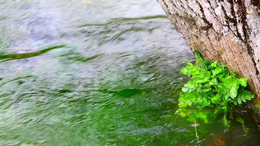 River water running against a tree and a water plant. | Shutterstock HD Video #6006413