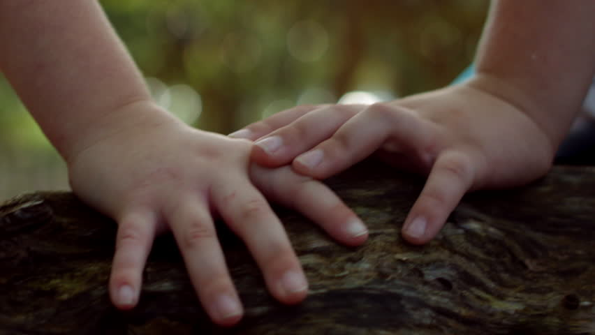 Closeup Of Two Little Kids' Hands Close Together As They Sit In Tree
