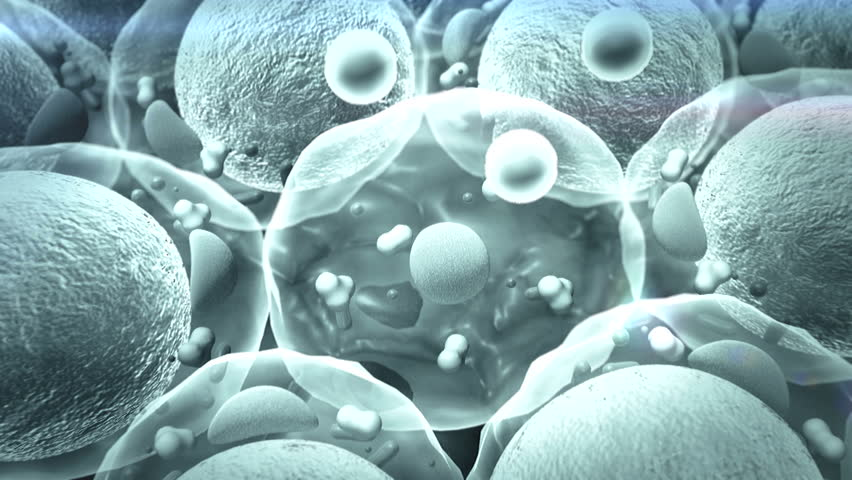 Cholesterol, Cell Structure, High Quality 3d Render Of Fat ...