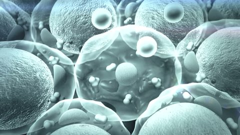 cells, Cell Division, field of  fat cells, High quality 3d render of fat cells,  cholesterol in a cells, cell structure, field of cells, Cell division, Microscopic image of cells