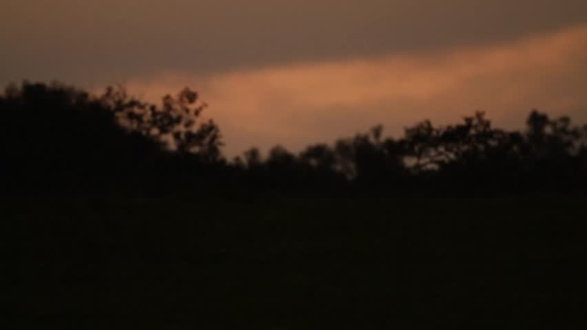 Photographer with Sky and Forest Silhouette at Sunset | Shutterstock HD Video #6087503