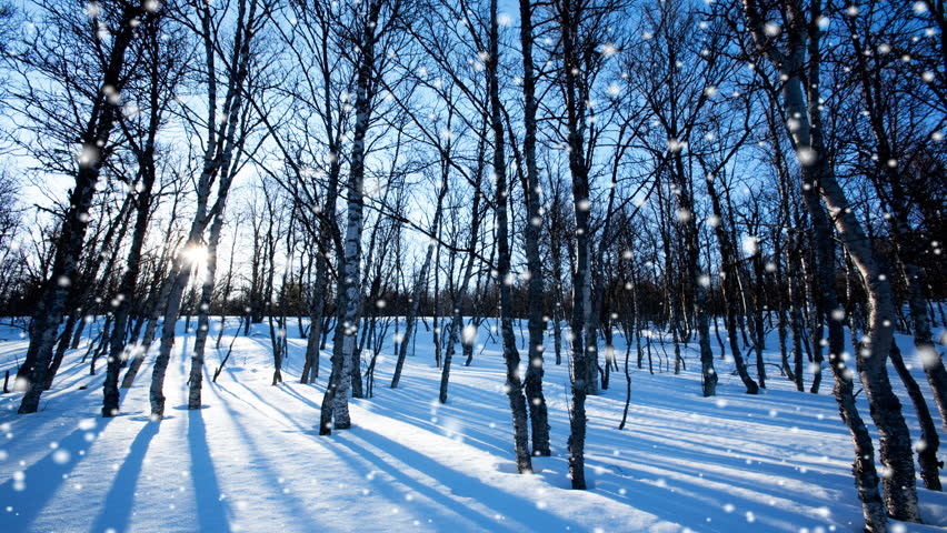 Seamless winter forest snow loop