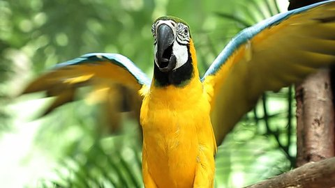 Gold and Blue Macaw On Stand