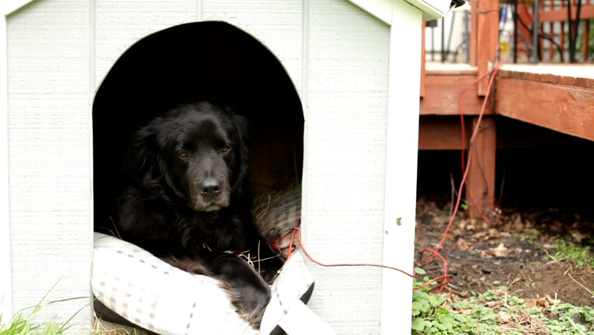 Black dog in outdoor house   Shutterstock HD Video #6206033