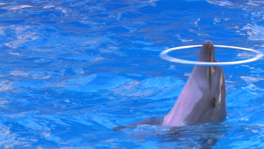 HD Three dolphins turning hoops on the noses in blue water, closeup, Canon XH A1, FullHD video, 1080p, 25fps, progressive scan