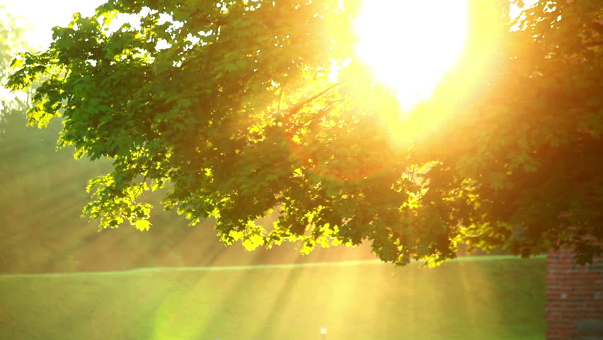 Image result for MORNING SUN and tree