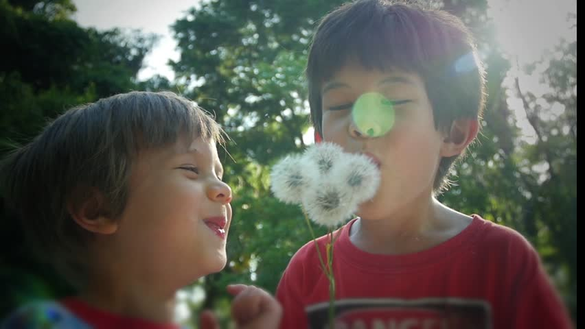 Two boys laughing being silly blowing dandelions, slow motion stock footage video clip