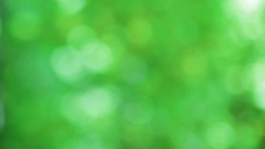 Defocused abstract nature background with green leaves and bokeh lights. HD | Shutterstock HD Video #6385133