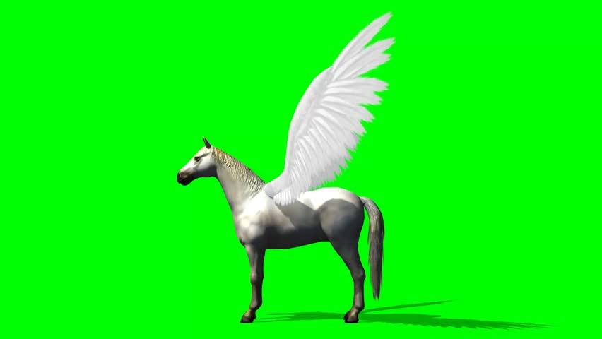 Pegasus Horse walks - green screen