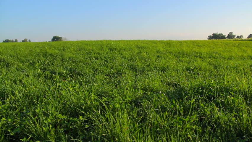 The big meadow in the rural landscape on summer day, calm atmosphere | Shutterstock HD Video #6635903