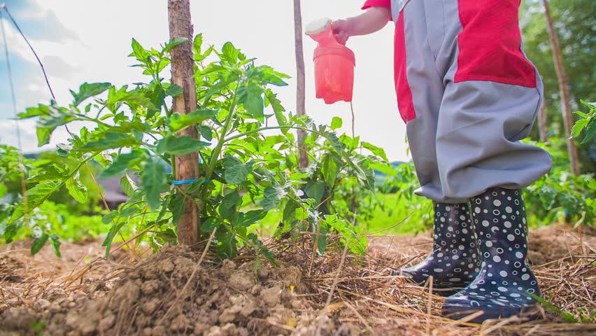 little kid gardener watering plants on garden in slow motion stock footage video 6661883 shutterstock