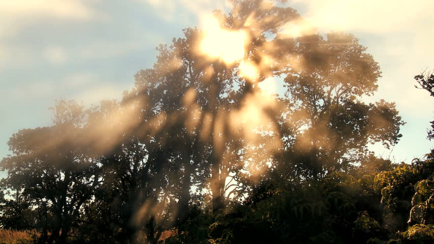 Time-lapse cloud & sunlight symbolizing trees absorbing carbon dioxide from the atmosphere & producing oxygen